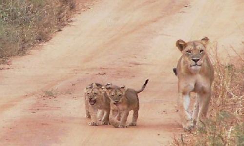 KENIA / Park Narodowy Tsavo West / w drodze do Ngulia Camp / rodzinka