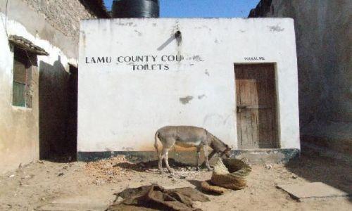 KENIA / północna Kenia / Lamu / strażnik przybytku