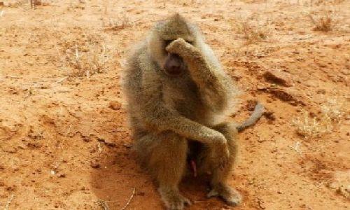Zdjecie KENIA / Park Narodowy Tsavo East / na drodze do Ndololo Camp / ale wstyd