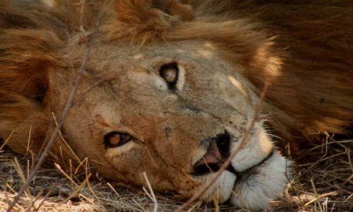 Zdjecie KENIA / Masai Mara / Masai Mara / Kto mnie budzi ?