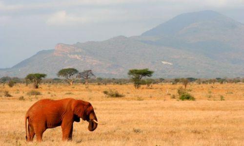 Zdjecie KENIA / brak / Kenia / Czerwony Słoń z Tsavo