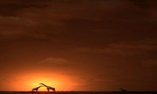 Zdjecie KENIA / Amboseli / Amboseli / ***