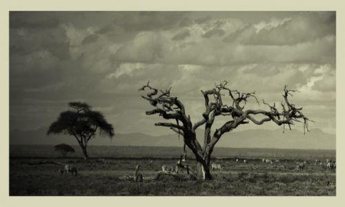 Zdjęcie KENIA / Amboseli / sawanna / ***