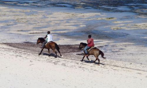 Zdjecie KENIA / Mombasa / Kikambala / pędzą konie po... plaży