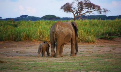 Zdjecie KENIA / Amboseli / Amboseli / Duży i mały ;-)