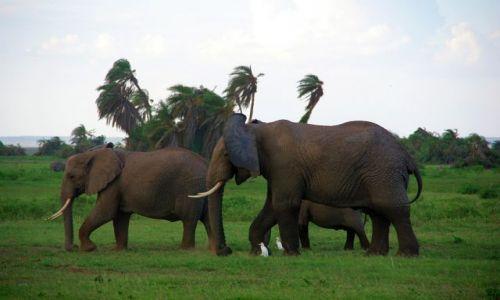Zdjecie KENIA / brak / Amboseli / Wietrznie