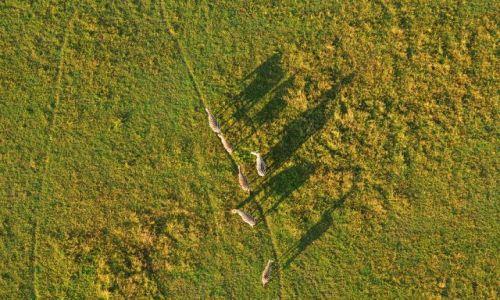 Zdjecie KENIA / Serengeti / Serengeti / widok na sawann