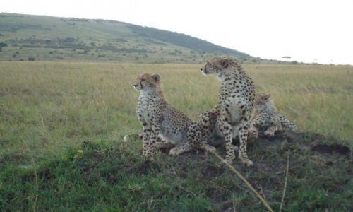 Zdjecie KENIA / brak / Park Masai Mara / z profilu