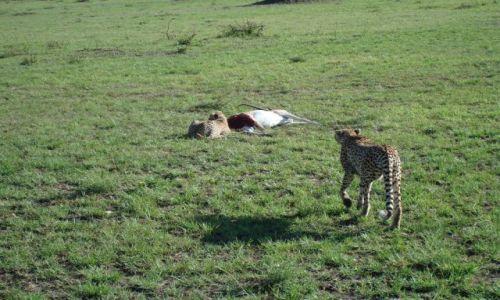 Zdjecie KENIA / brak / Park Masai Mara / podziel się posiłkiem:)