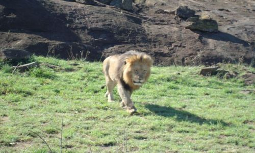 Zdjecie KENIA / brak / Park Masai Mara / Lefek