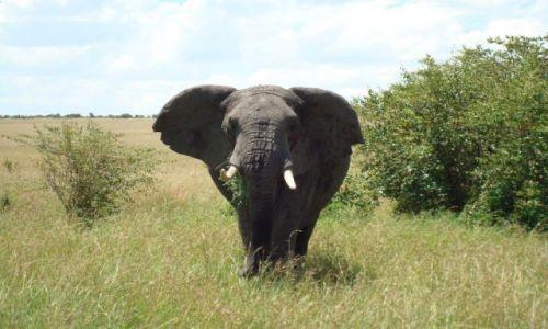 Zdjecie KENIA / brak / Park Masai Mara / Oko w oko ze słoniem