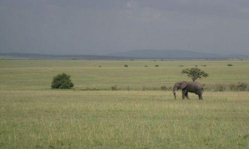 Zdjęcie KENIA / płd.zach.Kenia / Park Narodowy Masai Mara / Masai Mara