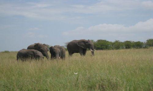 Zdjecie KENIA / płd.zach.Kenia / Park Narodowy Masai Mara / Masai Mara
