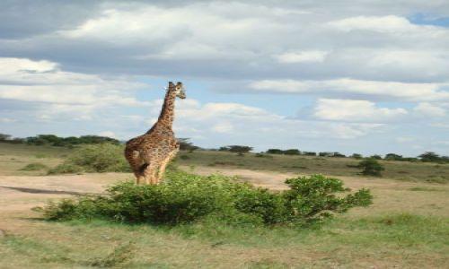 Zdjecie KENIA / brak / Masai Mara / Po prostu zgrabna dupcia:)