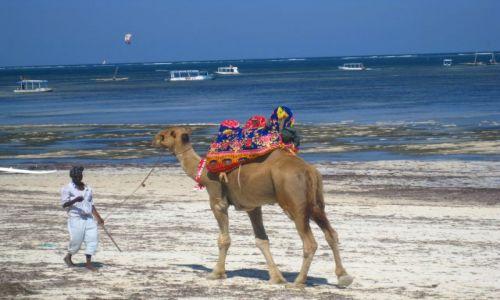 Zdjecie KENIA / brak / Mombasa / spacerek...