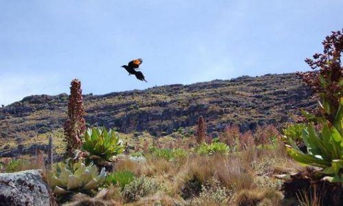 Zdjęcie KENIA / Mount Kenya / Mackinder Valley - llittle bird / Hiking Mount Kenya - Point Lenana