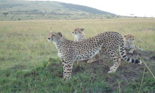 Zdjecie KENIA / brak / Masai Mara / Nie jestem profesjonalnym fotografem:)