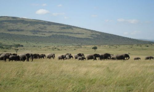 Zdjecie KENIA / brak / Masai Mara / Stadko