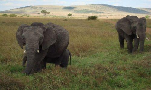 Zdjecie KENIA / brak / Masai Mara / Cała rodzinka