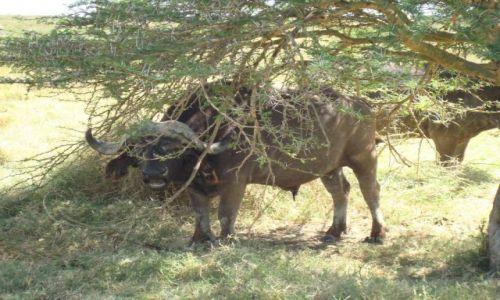 Zdjecie KENIA / brak / Lake Nakuru / Spadaj stąd:)