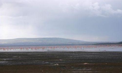 Zdjecie KENIA / Park Nakuru / park / 2 mln flamingów