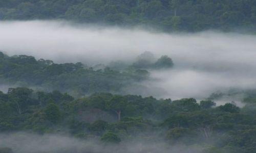 Zdjęcie KENIA / Kakamega / Kakamega - las deszczowy / Las deszczowy