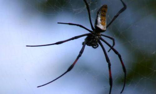 Zdjecie KENIA / wybrzeże / Diani Beach / Malutki pajączek