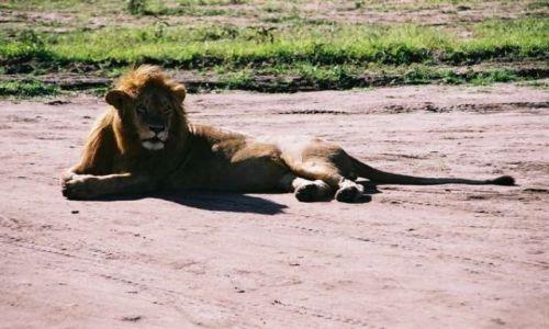 Zdj�cie KENIA / Masai Mara / sawanna / Kiciu� 3