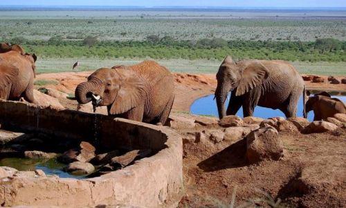 Zdjecie KENIA / brak / Park Narodowy Tsavo / przy wodopoju