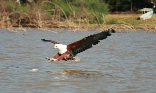 Zdjecie KENIA / brak / Lake Baringo / ... swoboda ... i klik migawki ...