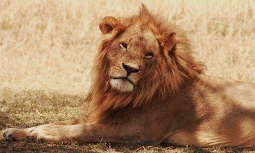 Zdjecie KENIA / brak / Park Masai Mara / ... swoboda ...