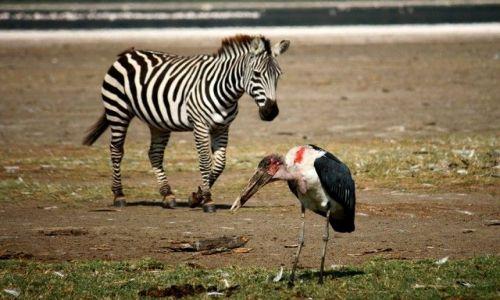 Zdjecie KENIA / brak / Lake Nakuru / ... swoboda ... i klik migawki ...