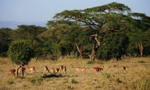 Zdjecie KENIA / brak / Lake Nakuru / (prawie) Ostatnie zielone okazy ;)