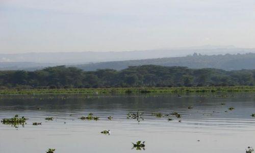 Zdjęcie KENIA / masai  / jezioro naivasha / naivasha
