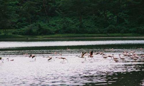 Zdjęcie KENIA / Rezerwat Naivasha / Jezioro / Do biegu,gotowi -start!
