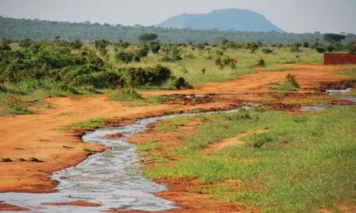 Zdjecie KENIA / Tsavo East / Tsavo East / W drodze do Taita Hills
