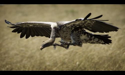 Zdjęcie KENIA / brak / Masai Mara / Lot