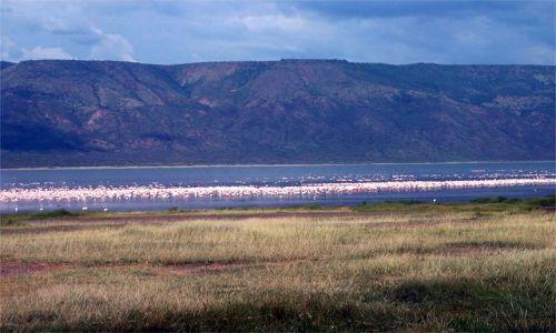 Zdjecie KENIA / brak / Jeziora Bogoria / flamingi