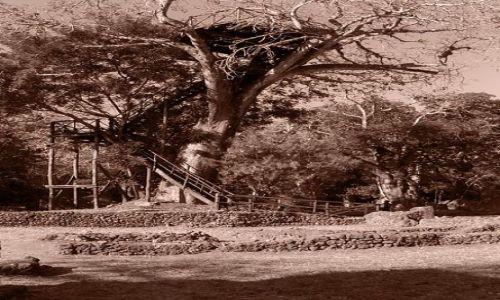 Zdjęcie KENIA / Malindi / Gedi / Gedi