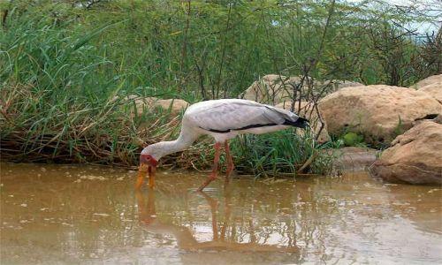 Zdjecie KENIA / Wielki R�w Afryka�ski / Jezioro Baringo / nad jeziorem Ba