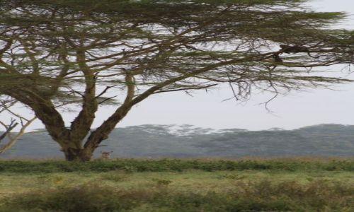 Zdjęcie KENIA / nakuru / nakuru / safari