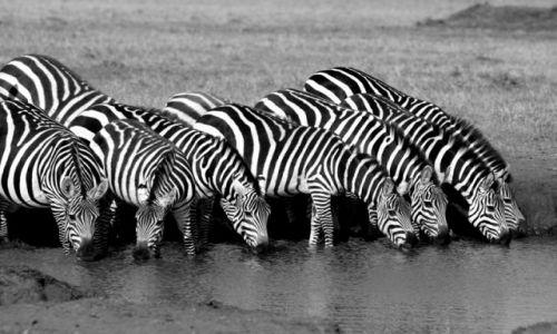 Zdjecie KENIA / Masai Mara / Masai Mara / Black & White