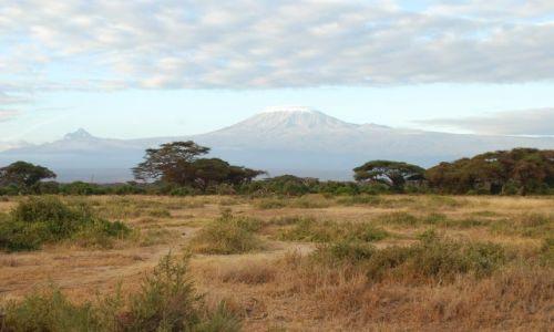Zdjecie KENIA / - / Amboseli / Kilimangiaro