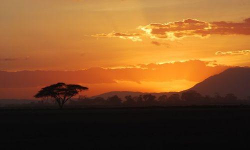 Zdjecie KENIA / - / Amboselli / Zachód w samotnosci