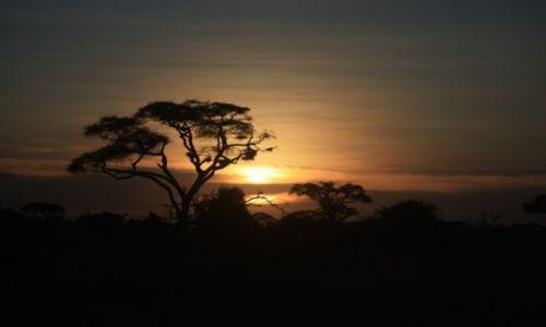 Zdjecie KENIA / - / Park Narodowy Ambosel / afrykański zachód