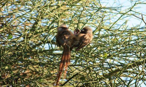 Zdjecie KENIA / Amboseli / Park Narodowy Amboseli / Konkurs cuda natury - ornitologiczne serduszko