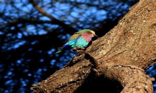 Zdjecie KENIA / Mombasa / Park Narodowy Tsavo East / bezimienny 3