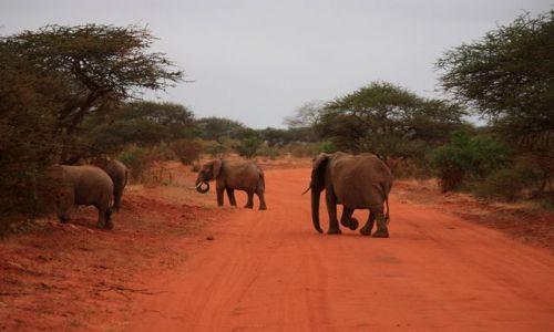 Zdjecie KENIA / Mombasa / Park Narodowy Tsavo East / du�y ma pierwsz