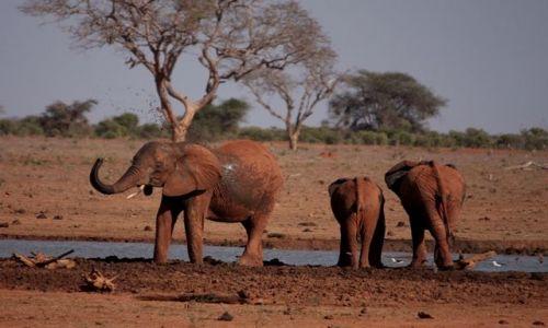 Zdjęcie KENIA / Mombasa / Park Narodowy Tsavo East / poranny prysznic.....