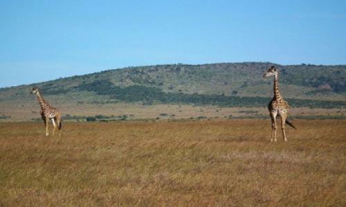 Zdjecie KENIA / MASAI MARA / MASAI MARA / KENIA WILDLIFE